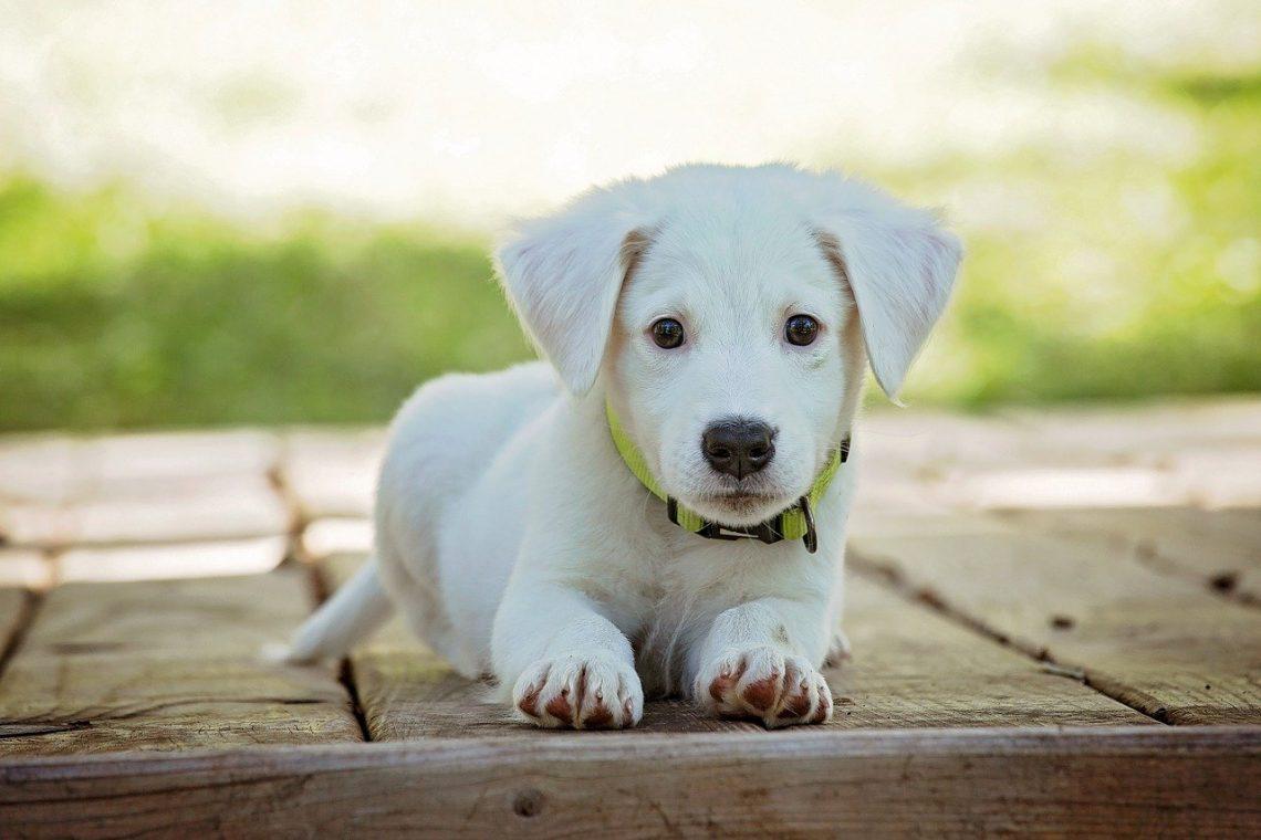 Лучший способ путешествовать с собакой или домашними животными